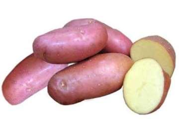 Картофель Лапоть описание сорта