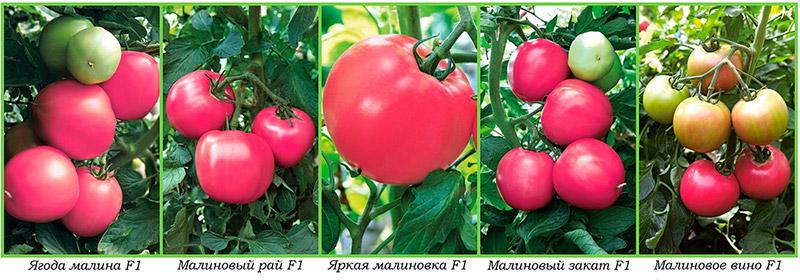 Гибриды сорта томата Малиновое чудо
